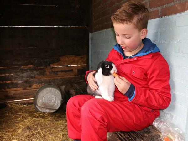 Knuffelen met de konijntjes en worteltjes voeren.