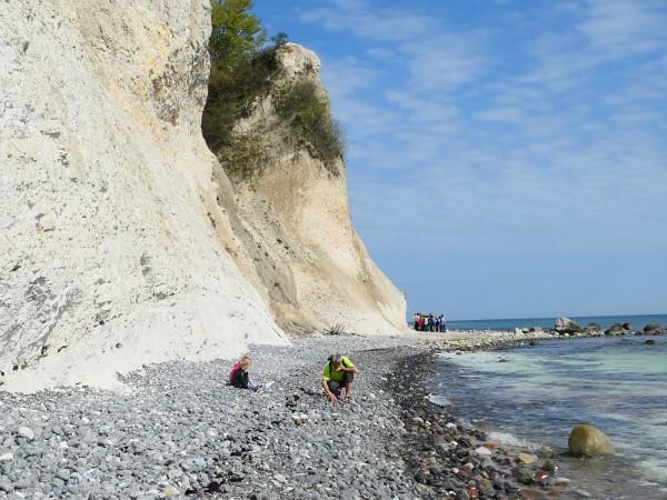 Fossielen zoeken op het strand bij Mons Klint