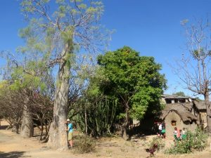 De kinderen in het dorp Zazafotsy kijken vreemd toe hoe wij de baobabs knuffelen