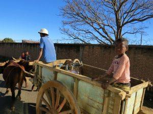 Veel vervoer in Madagascar is per zeboe-kar