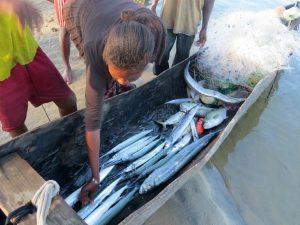 De gevangen vis