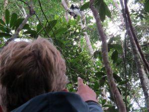 Zeb ziet een Indri Indri in Andasibe National Park
